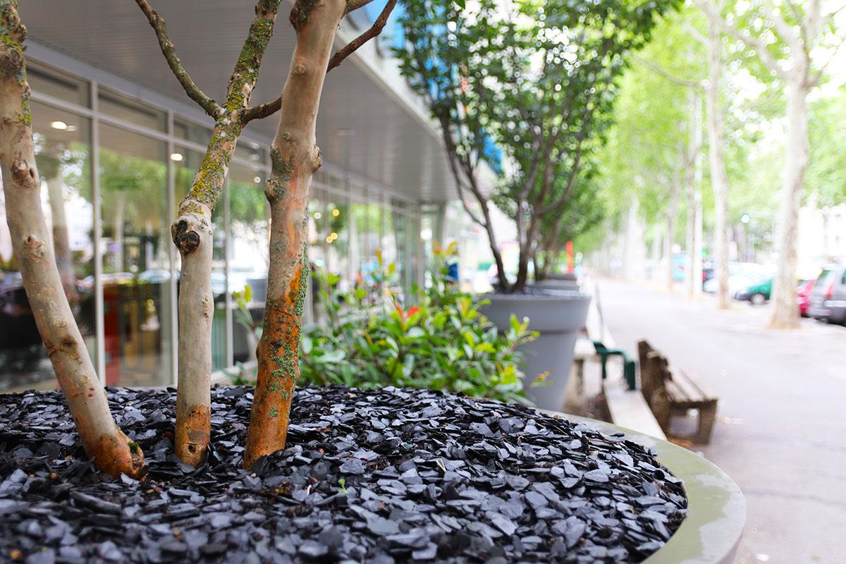 arbres en pots pour supermarché à Lyon